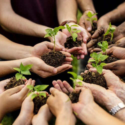 group of hands holding sprouts