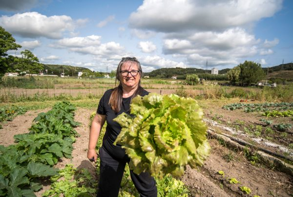 woman harvesting lettuce in short chain food system