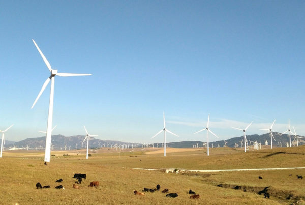 windmills and cows